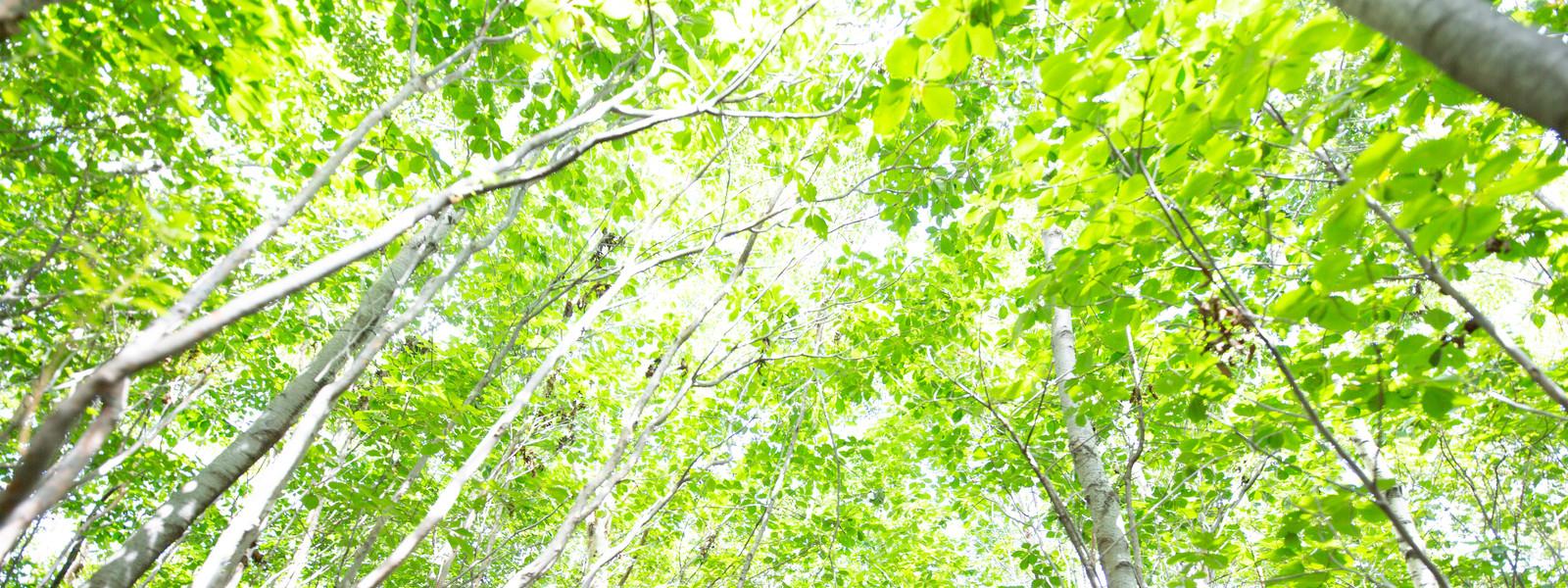 NPO環~WA|里山保全・環境教育